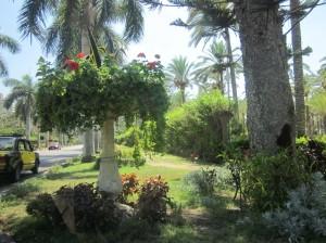 Montazah Gardens, Alexandria